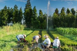 Organic Farm 悦丰岛有机农场