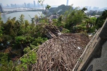 148 展覽展示民署樹隊人員克服困難,清理主教山教堂倒下的石牆樹