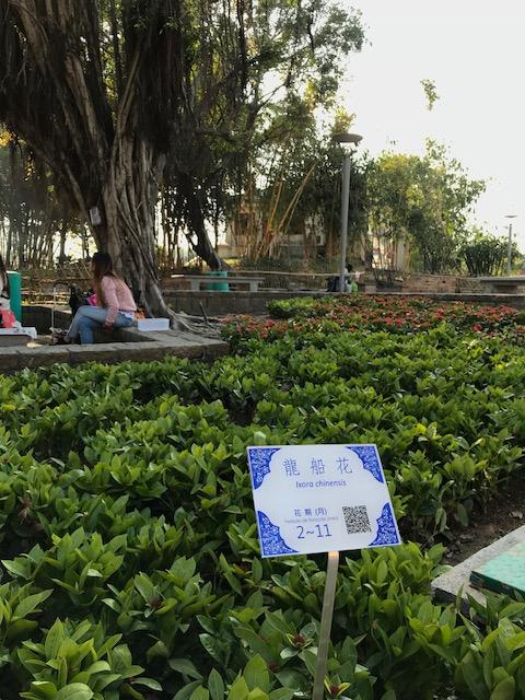 186 葡國磚植物介紹牌