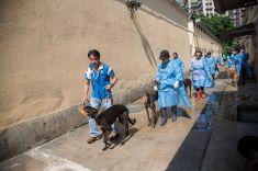 民署人員帶領義工牽引格力犬散步