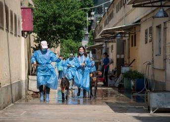 義工們帶格力犬運動散步及排便