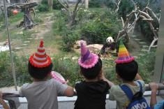 小朋友戴上生日帽合唱生日歌為「開開」送上祝福