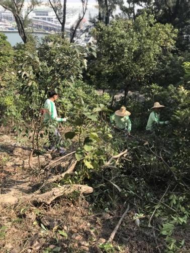 190 管護人員清理公園林區藤蔓