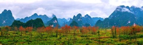 南疆木棉紅 - 林光英
